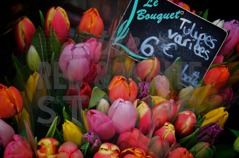 Tulipes Variees